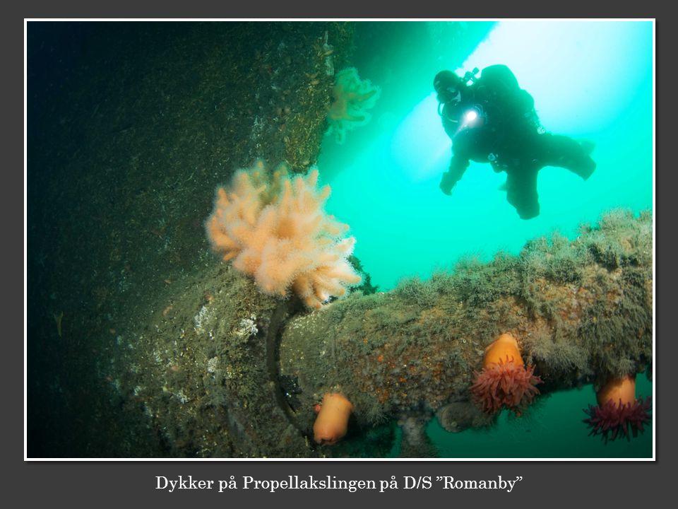 Dykker på Propellakslingen på D/S Romanby