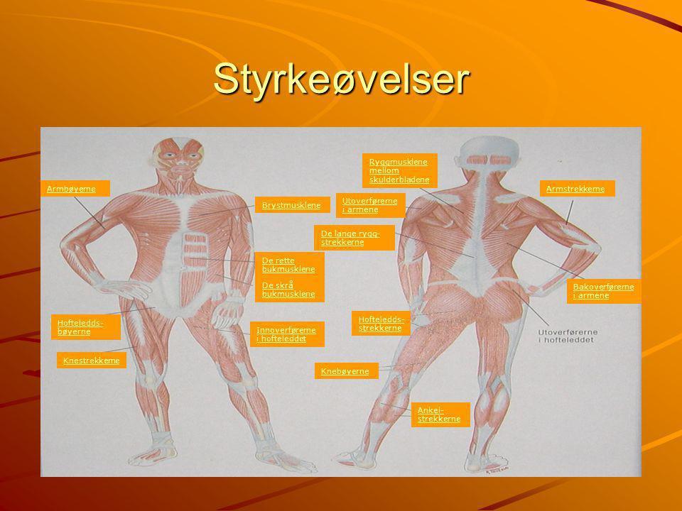Styrkeøvelser Ryggmusklene mellom skulderbladene Armbøyerne