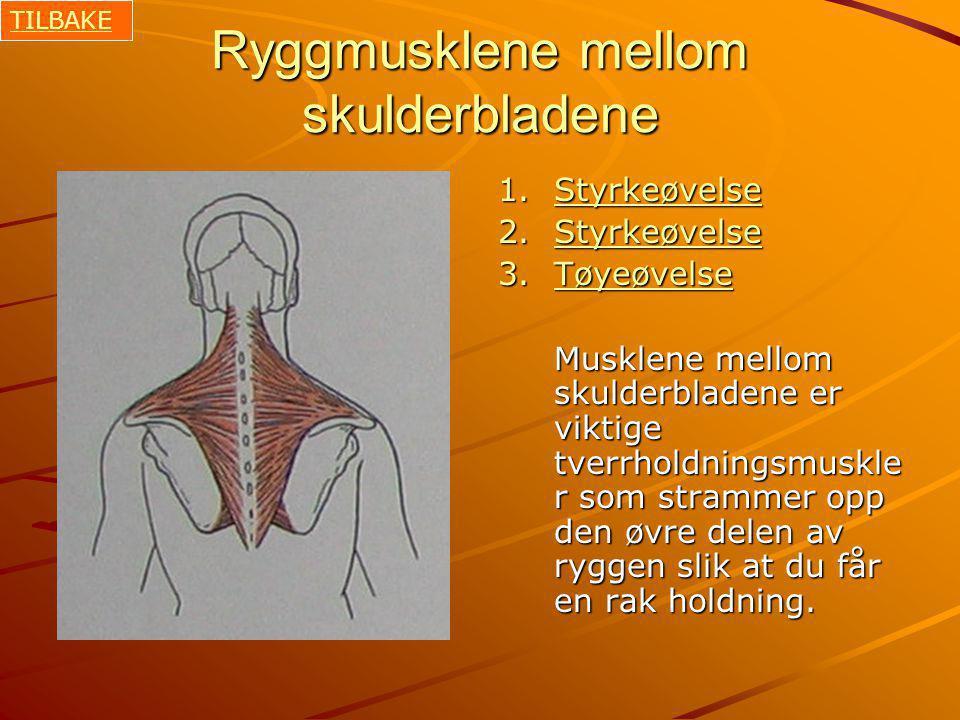 Ryggmusklene mellom skulderbladene