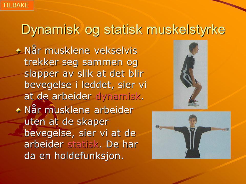 Dynamisk og statisk muskelstyrke