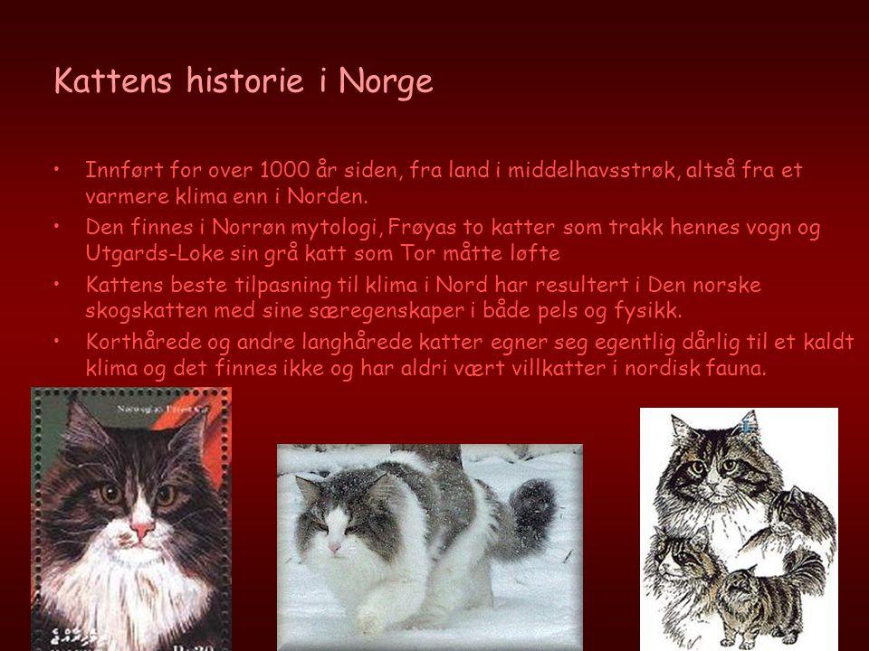Kattens historie i Norge