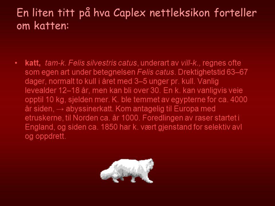 En liten titt på hva Caplex nettleksikon forteller om katten: