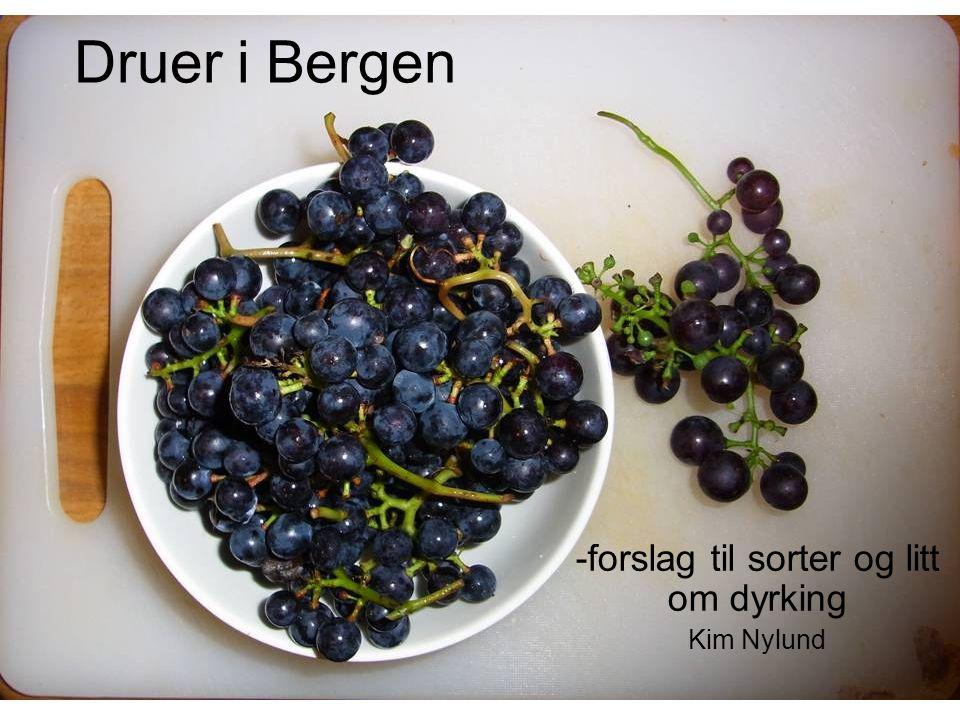 -forslag til sorter og litt om dyrking Kim Nylund