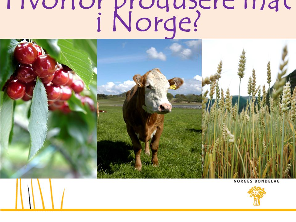 Hvorfor produsere mat i Norge