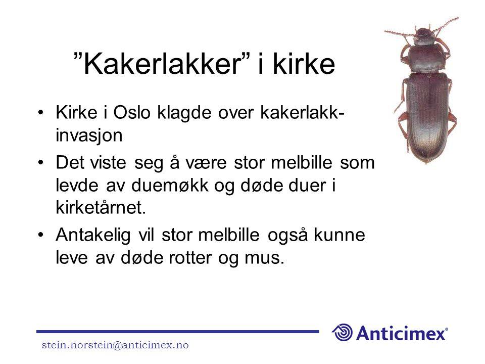 Kakerlakker i kirke Kirke i Oslo klagde over kakerlakk-invasjon