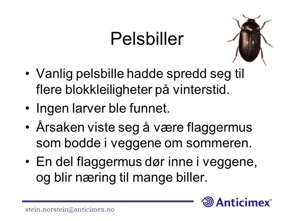 Pelsbiller Vanlig pelsbille hadde spredd seg til flere blokkleiligheter på vinterstid. Ingen larver ble funnet.