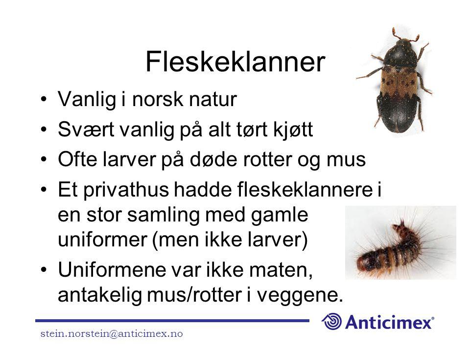 Fleskeklanner Vanlig i norsk natur Svært vanlig på alt tørt kjøtt