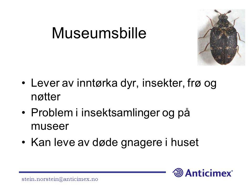 Museumsbille Lever av inntørka dyr, insekter, frø og nøtter