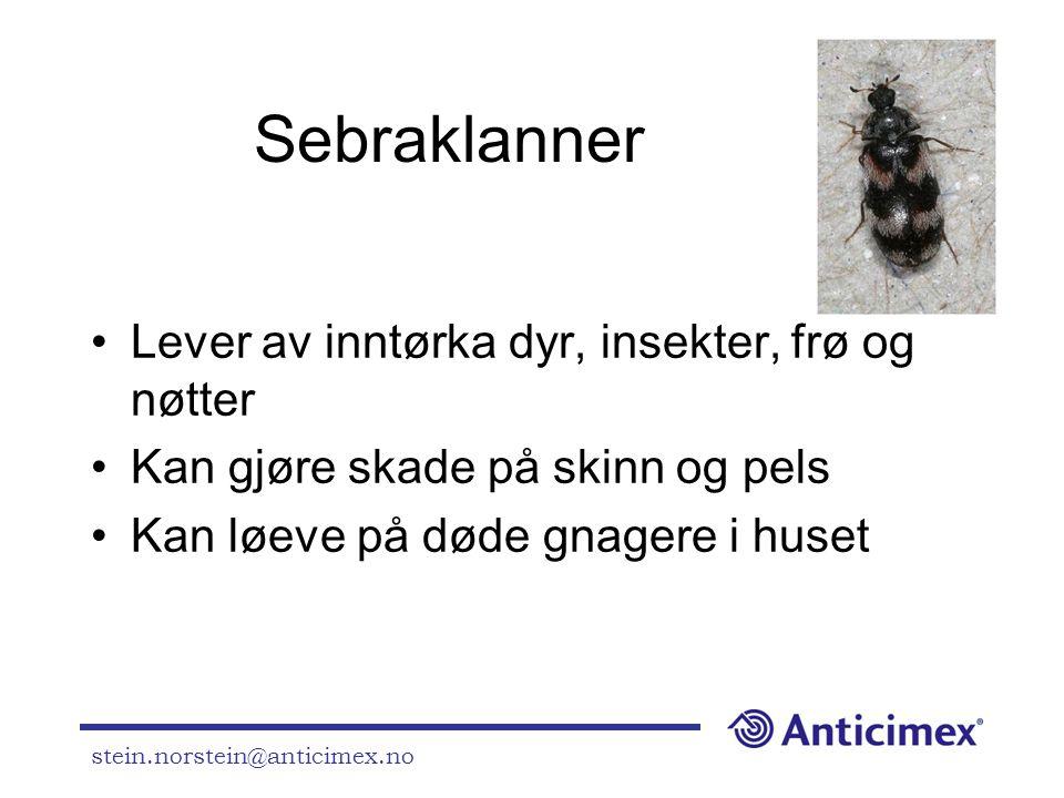 Sebraklanner Lever av inntørka dyr, insekter, frø og nøtter