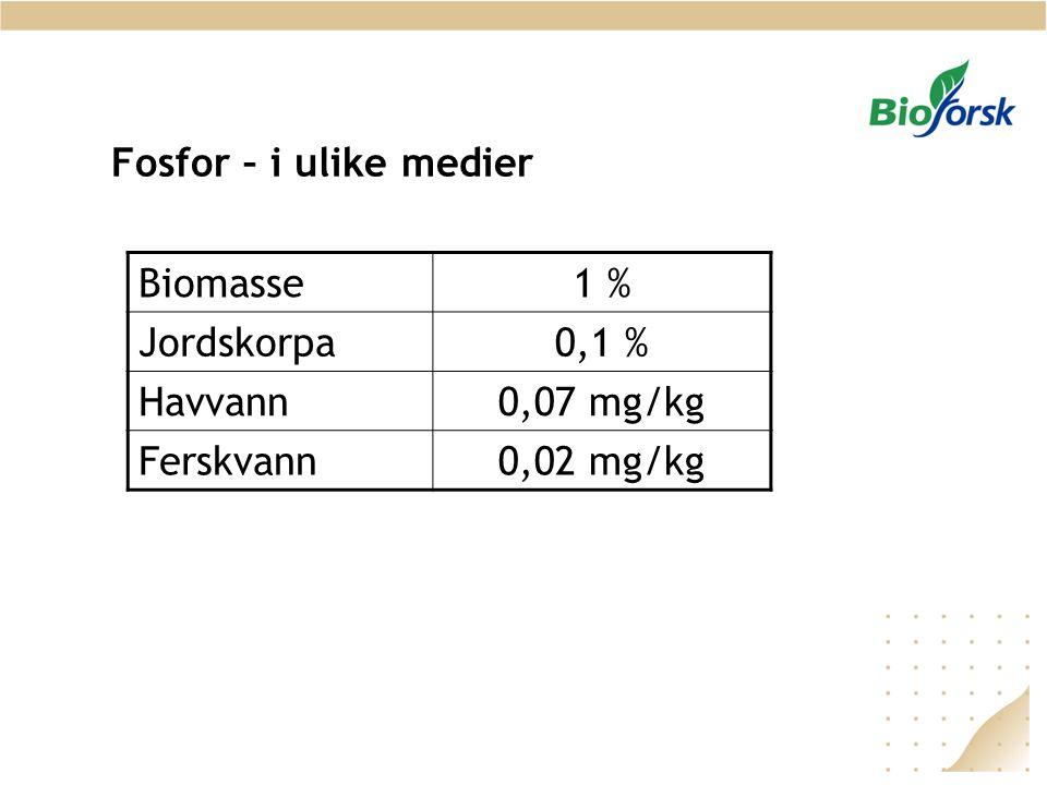 Fosfor – i ulike medier Biomasse 1 % Jordskorpa 0,1 % Havvann 0,07 mg/kg Ferskvann 0,02 mg/kg