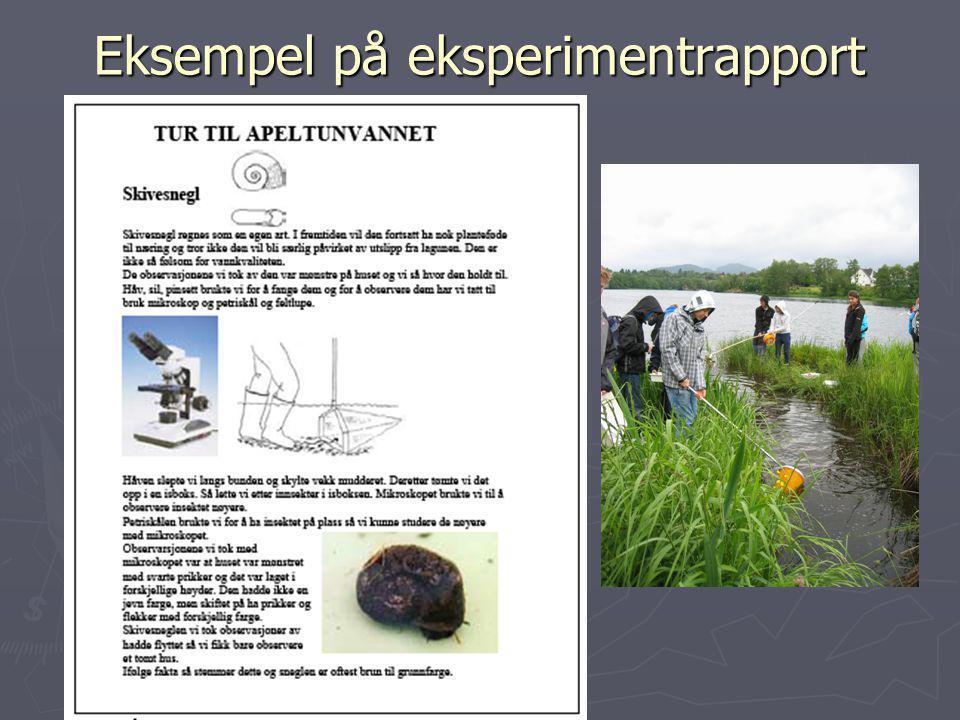 Eksempel på eksperimentrapport