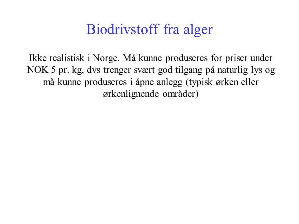 Biodrivstoff fra alger