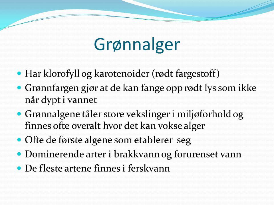 Grønnalger Har klorofyll og karotenoider (rødt fargestoff)