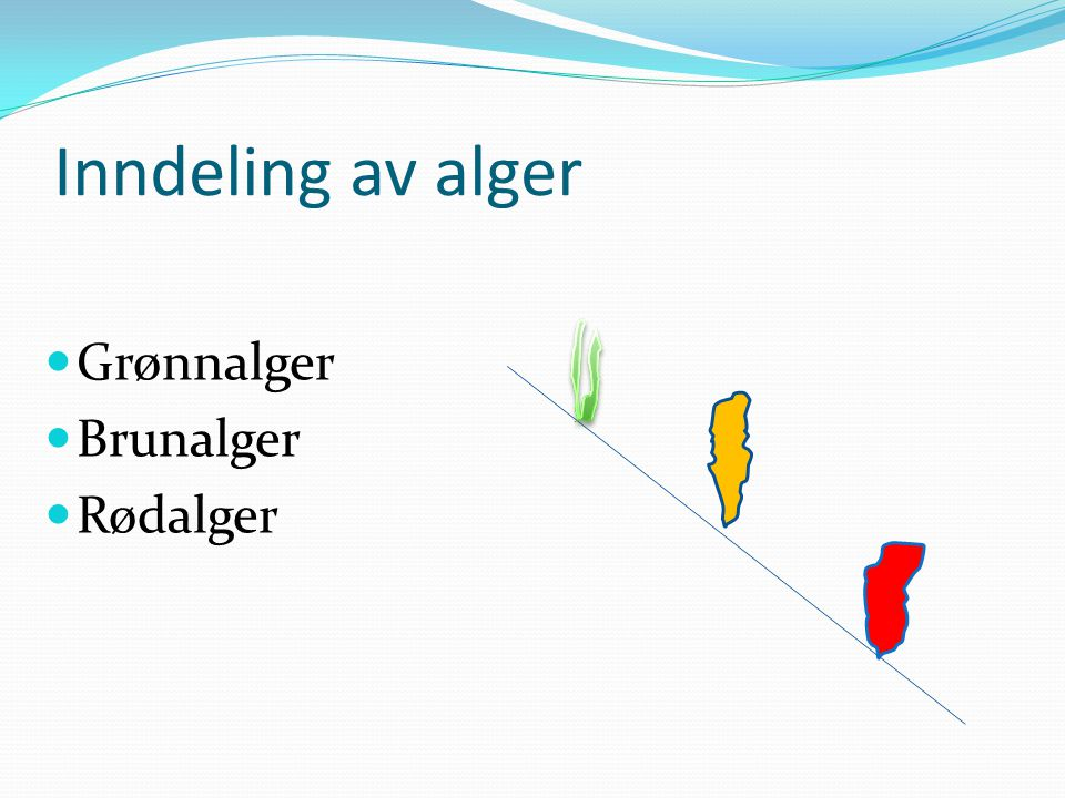 Inndeling av alger Grønnalger Brunalger Rødalger