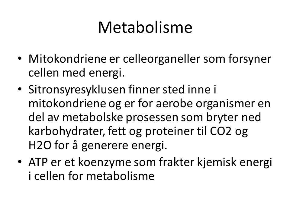 Metabolisme Mitokondriene er celleorganeller som forsyner cellen med energi.