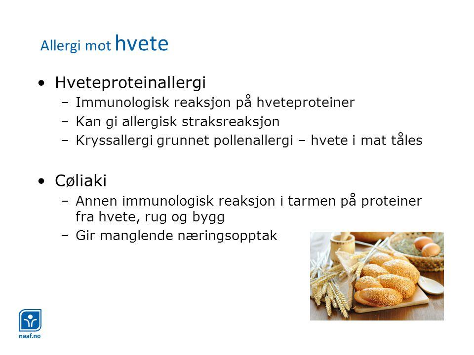 Allergi mot hvete Hveteproteinallergi Cøliaki