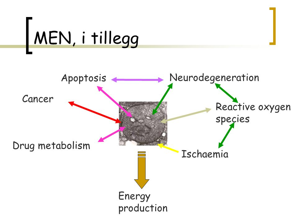 MEN, i tillegg Apoptosis Neurodegeneration Cancer Reactive oxygen