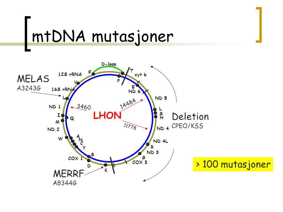 mtDNA mutasjoner MELAS LHON Deletion > 100 mutasjoner MERRF A3243G