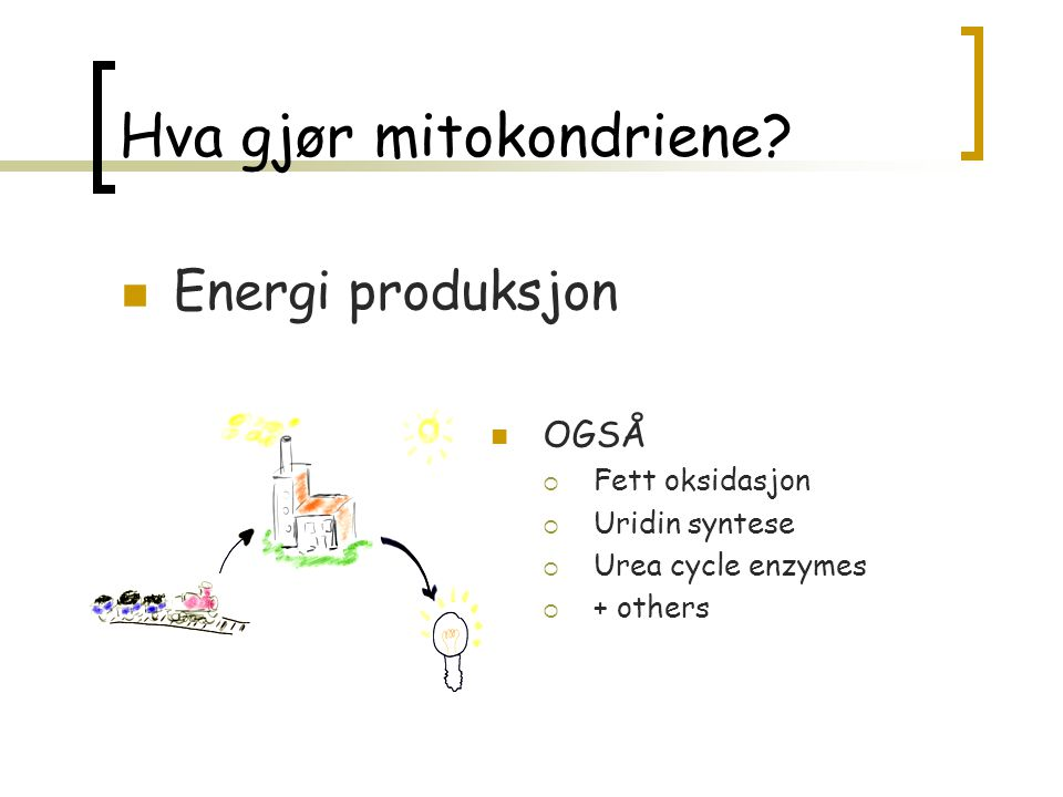 Hva gjør mitokondriene