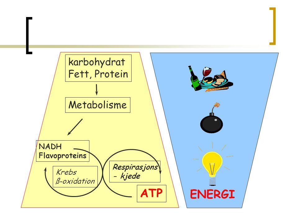ATP ENERGI karbohydrat Fett, Protein Metabolisme NADH Flavoproteins