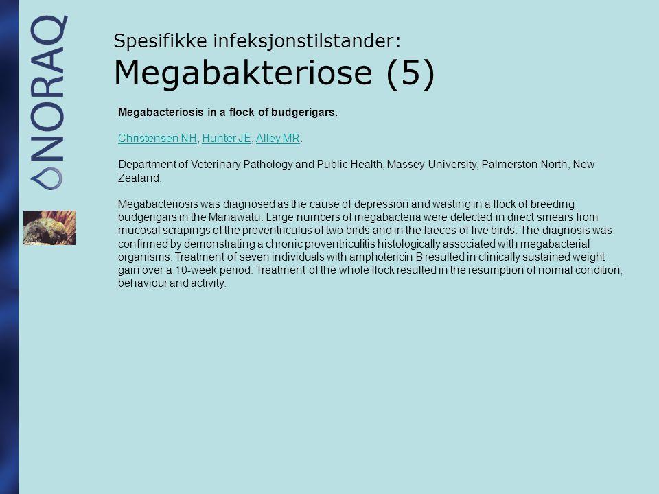 Spesifikke infeksjonstilstander: Megabakteriose (5)