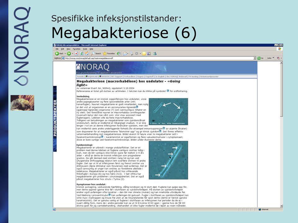 Spesifikke infeksjonstilstander: Megabakteriose (6)