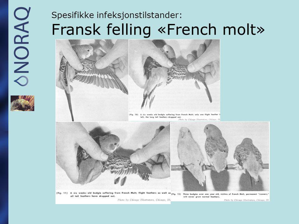 Spesifikke infeksjonstilstander: Fransk felling «French molt»
