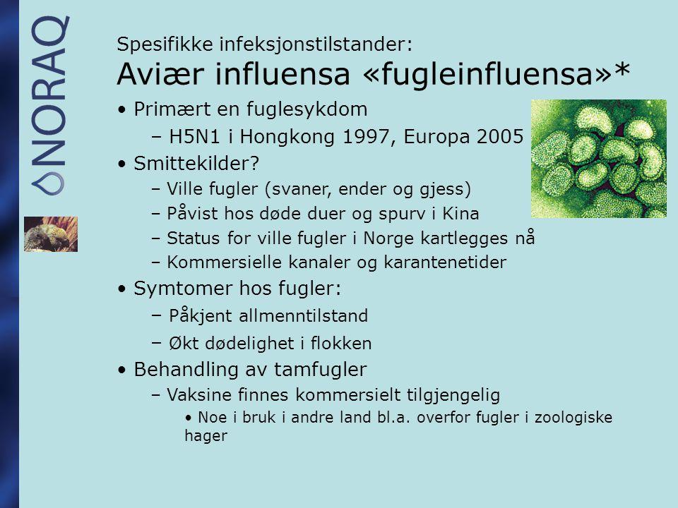 Spesifikke infeksjonstilstander: Aviær influensa «fugleinfluensa»*