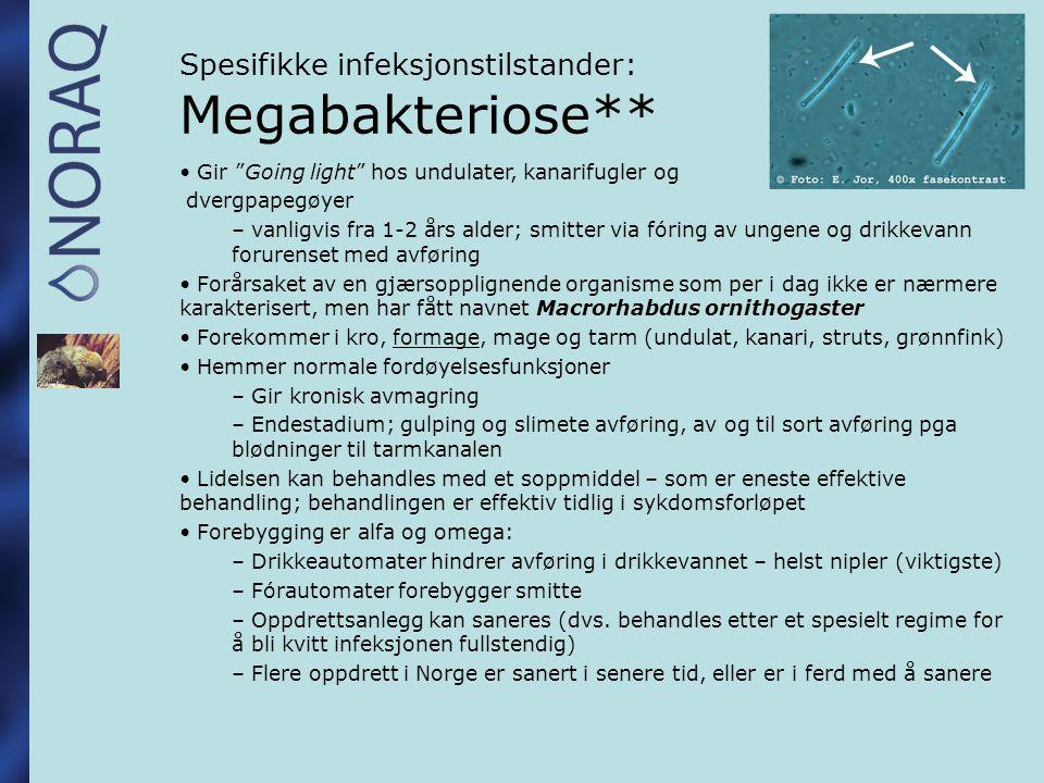Spesifikke infeksjonstilstander: Megabakteriose**