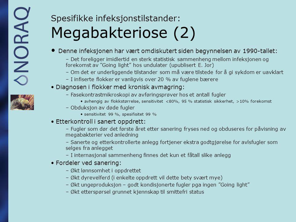 Spesifikke infeksjonstilstander: Megabakteriose (2)