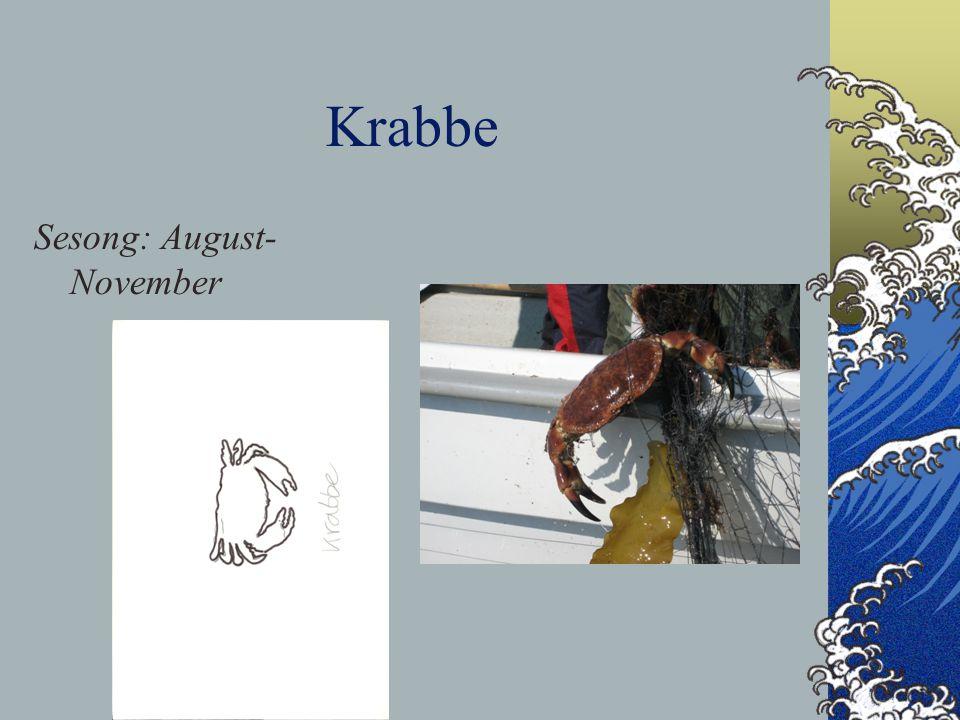 Krabbe Sesong: August- November