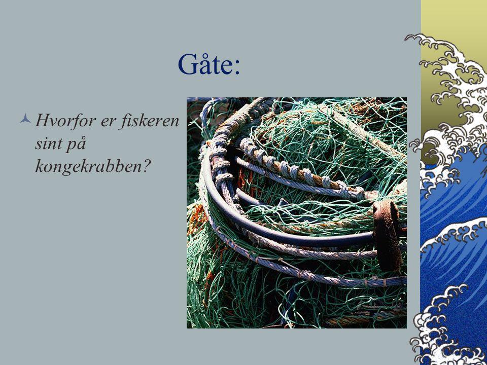Gåte: Hvorfor er fiskeren sint på kongekrabben