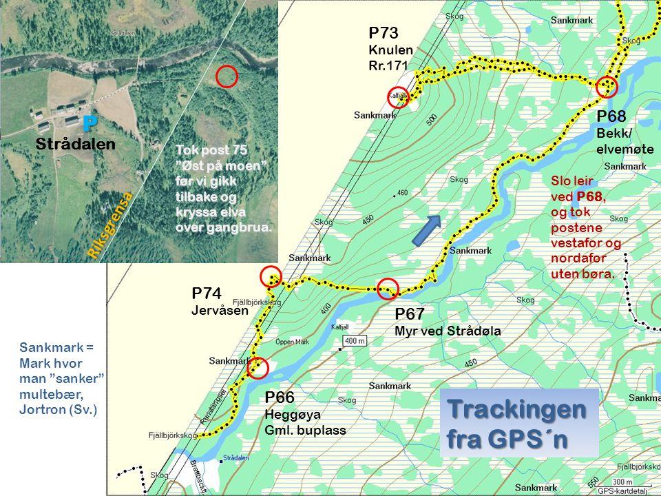 Trackingen fra GPS´n P P73 P68 Strådalen Riksgrensa P74 P67 P66 Knulen