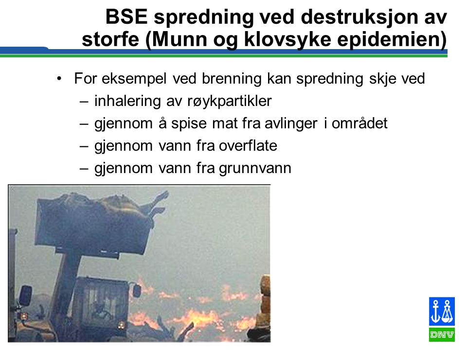 BSE spredning ved destruksjon av storfe (Munn og klovsyke epidemien)
