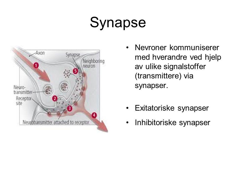 Synapse Nevroner kommuniserer med hverandre ved hjelp av ulike signalstoffer (transmittere) via synapser.