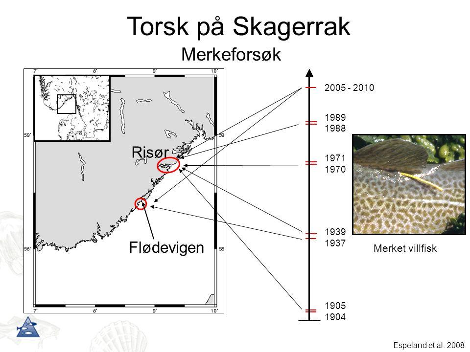 Torsk på Skagerrak Merkeforsøk Risør Flødevigen Merket villfisk