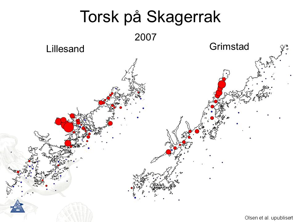 Torsk på Skagerrak 2007 Grimstad Lillesand Olsen et al. upublisert