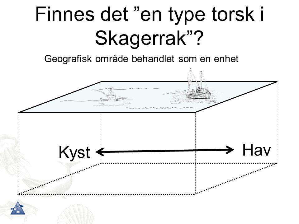 Finnes det en type torsk i Skagerrak