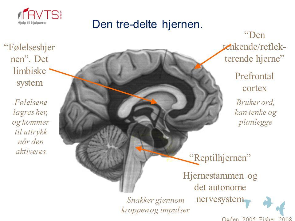 Den tre-delte hjernen. Den tenkende/reflek- terende hjerne
