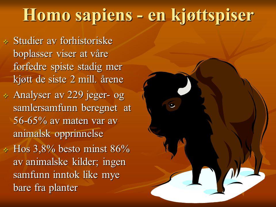 Homo sapiens - en kjøttspiser