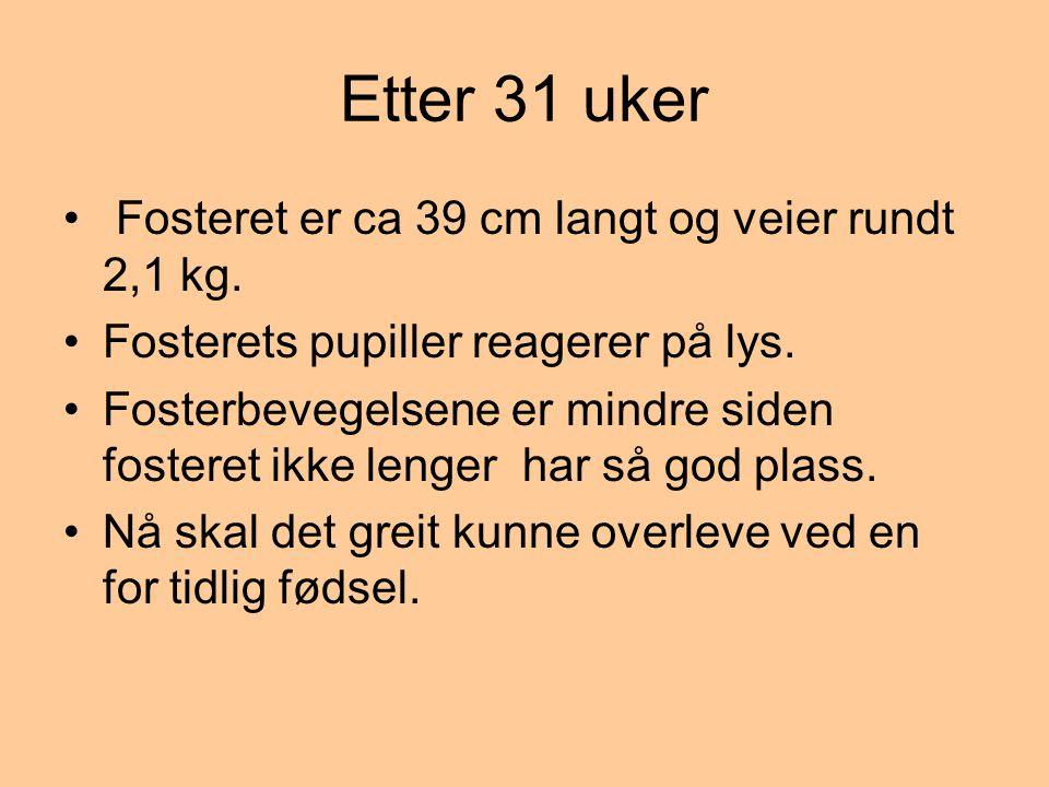 Etter 31 uker Fosteret er ca 39 cm langt og veier rundt 2,1 kg.