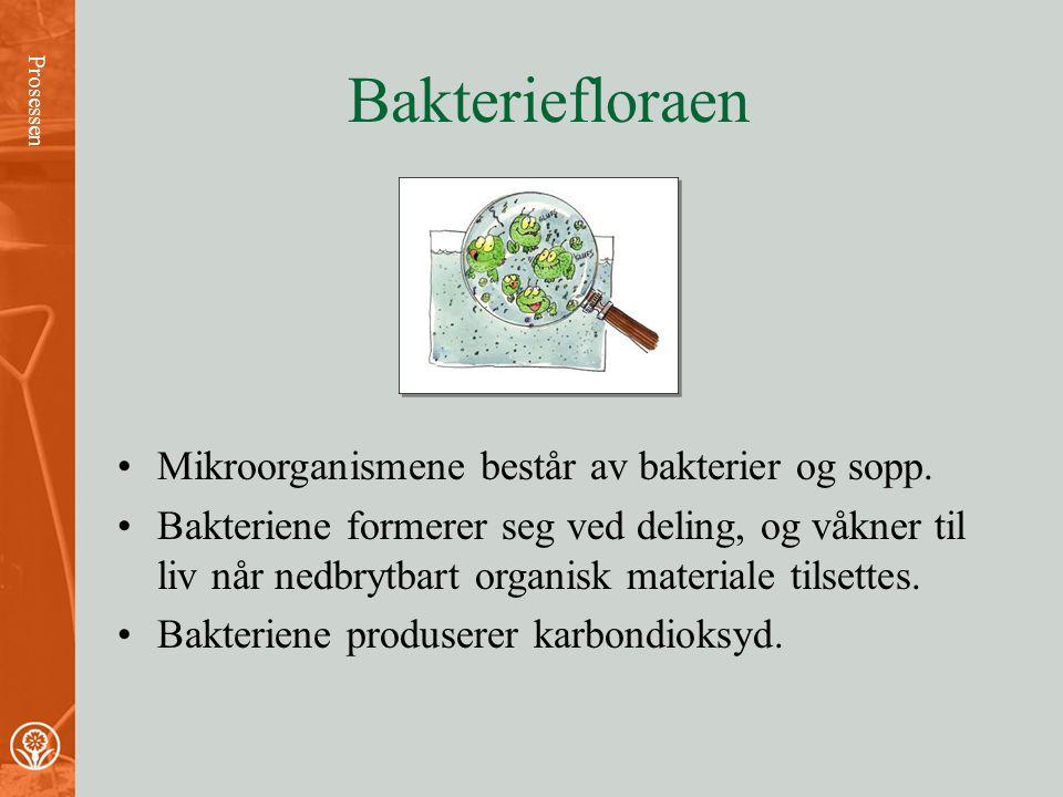 Bakteriefloraen Mikroorganismene består av bakterier og sopp.