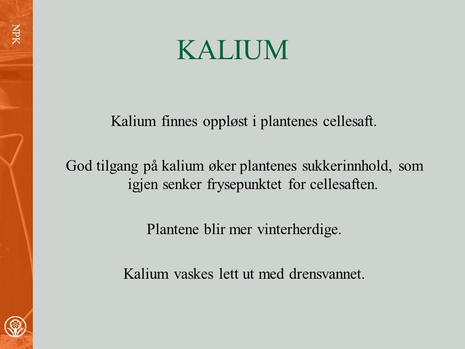 KALIUM Kalium finnes oppløst i plantenes cellesaft.