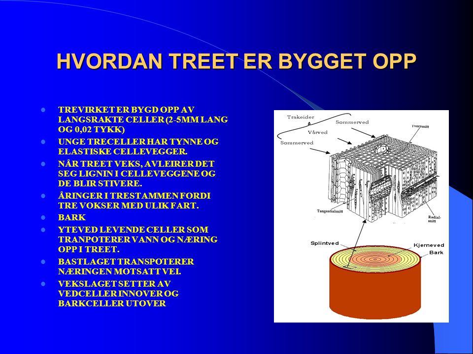 HVORDAN TREET ER BYGGET OPP