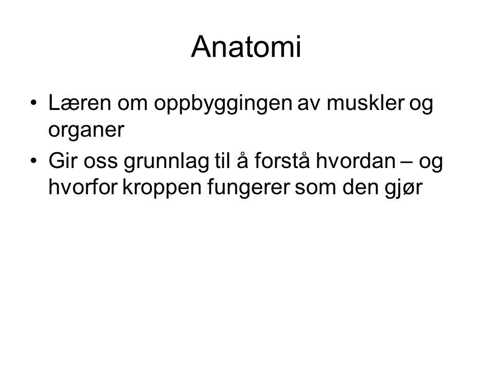Anatomi Læren om oppbyggingen av muskler og organer