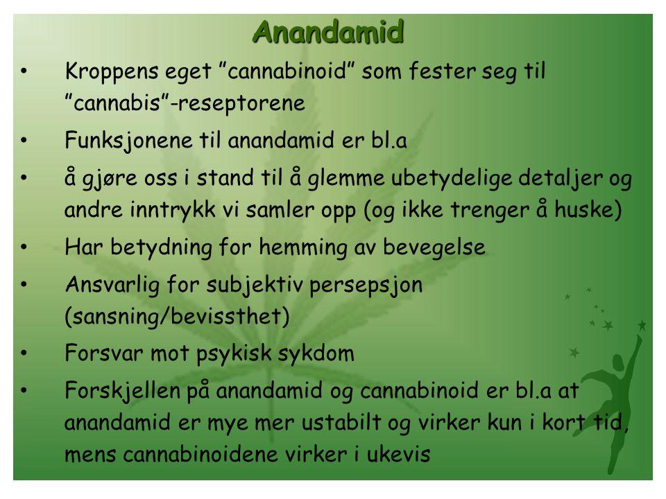 Anandamid Kroppens eget cannabinoid som fester seg til cannabis -reseptorene. Funksjonene til anandamid er bl.a.