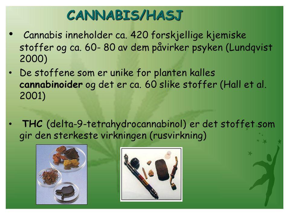 CANNABIS/HASJ Cannabis inneholder ca. 420 forskjellige kjemiske stoffer og ca. 60- 80 av dem påvirker psyken (Lundqvist 2000)