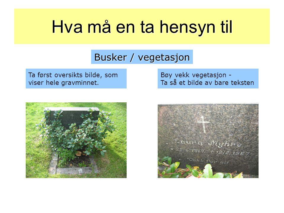 Hva må en ta hensyn til Busker / vegetasjon