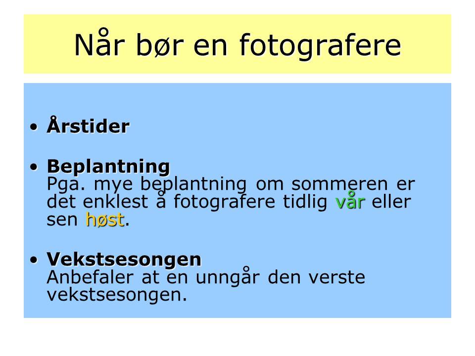 Når bør en fotografere Årstider