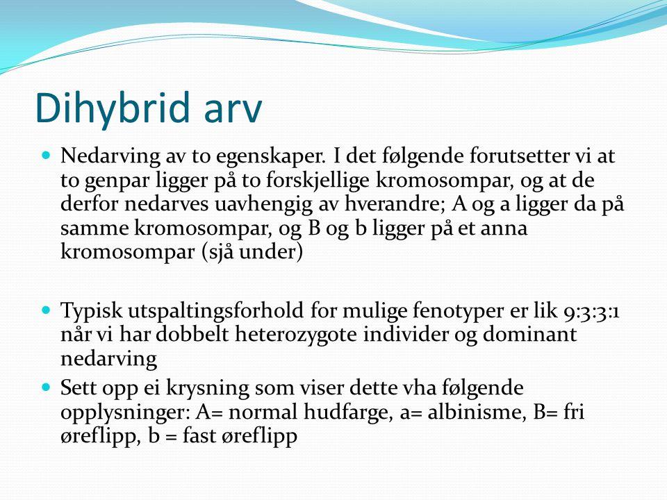 Dihybrid arv